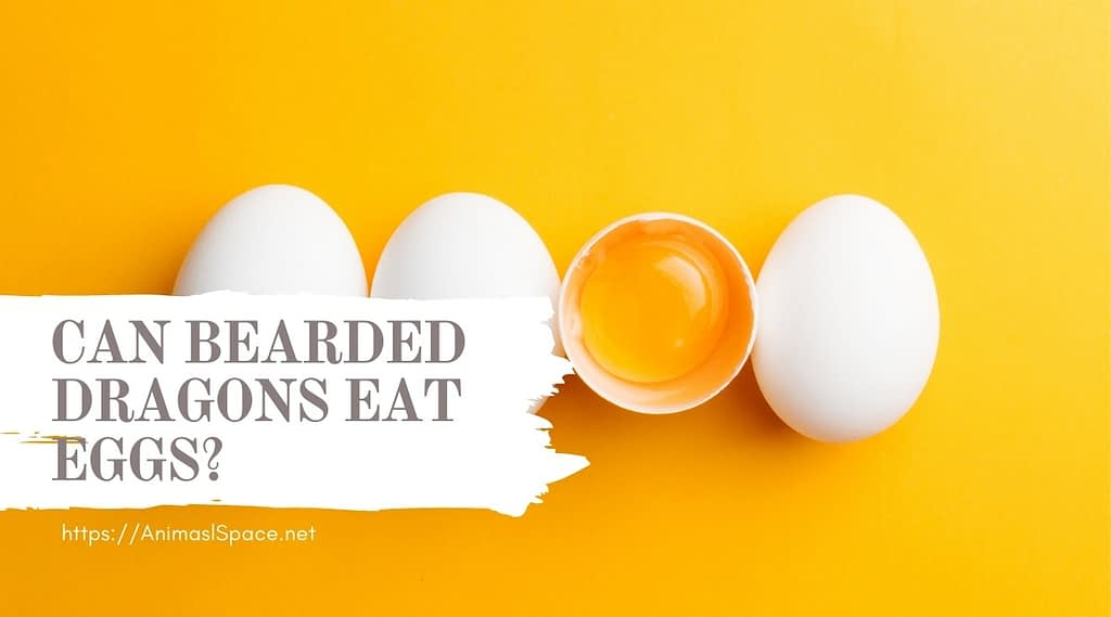 can bearded dragons eat eggs